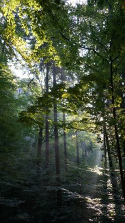 morgenwald