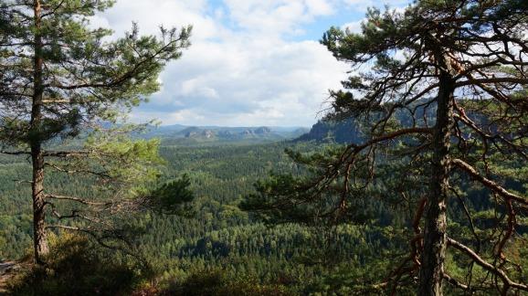 weite wälder