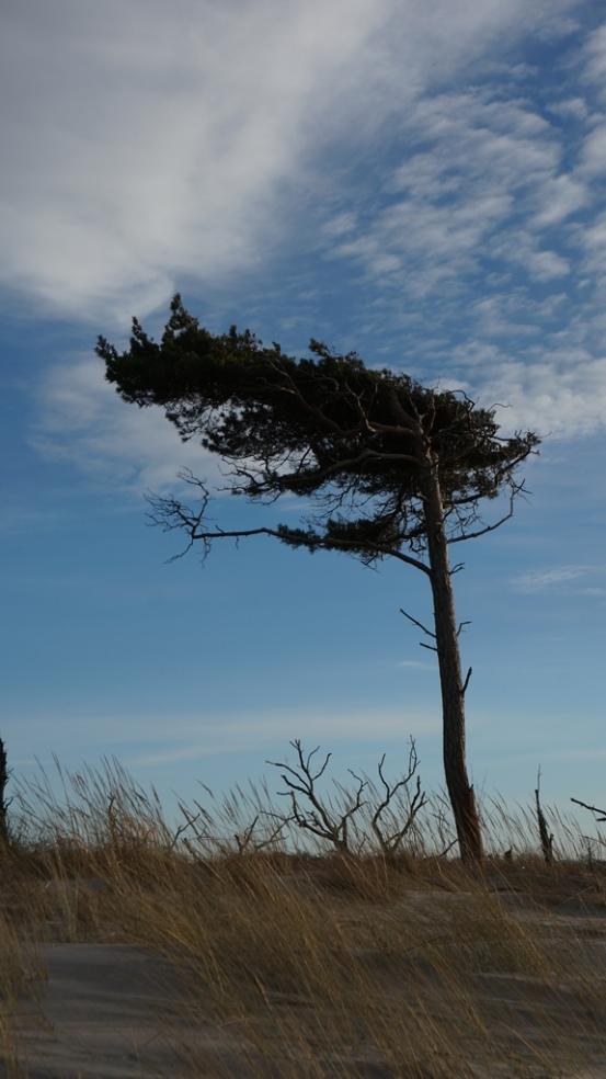 windflucht