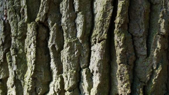 rindenstruktur