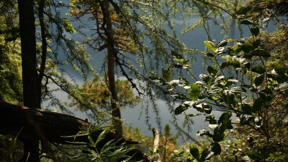 bergwald-und-koenigssee