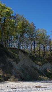 strand klippe wald
