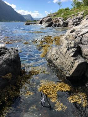 fjordufer