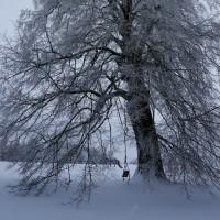 Schneesturmwärme II