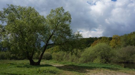 picknickbaum